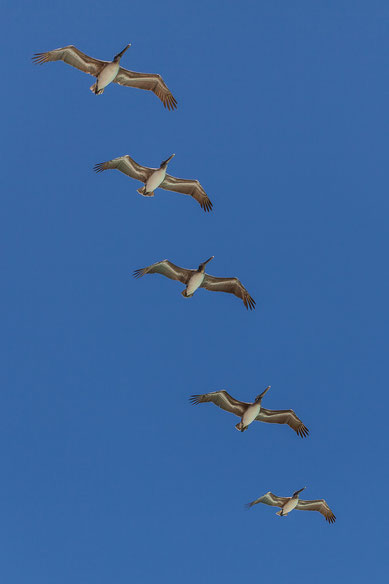 Photograph of birds
