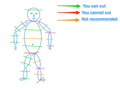A simple draw about where to cut on a human body in photography