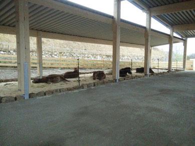 Zentrum für Pferdegesundheit: Liegebereich beim Offenstall