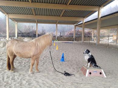 Zentrum für Pferdegesundheit: Reithalle mit Pummel & Fips