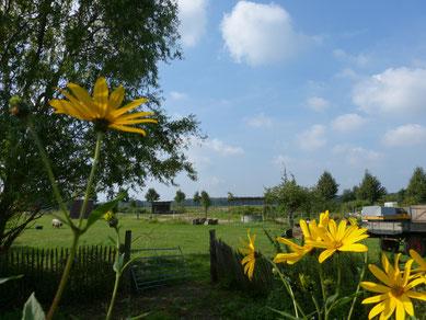 Der Ökohof Fläming im Rückblick auf das Jahr 2014. Die Imkerei und Honigbienen hatten ihre Höhen und Tiefen. Blick vom Garten aus, Topinambur, links ein paar Weiden, rechts die Kutsche. Unsere Pferdekoppel unter blauem Himmel mit Wolken