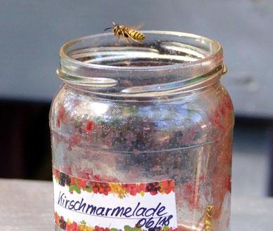 Auch die beflügelten Schwarz- Gelblinge mögen Hausgemachte Marmelade
