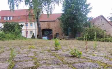 Die grüne Oase mitten in Klinze City.....