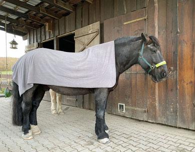 Willi mit einer einfachen Fleece-Decke
