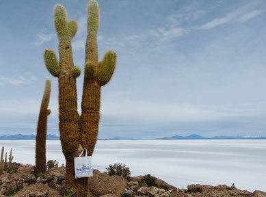 Salzwüste Bolivien, Riesenkaktus im Vordergrund mit Apothekentasche, Berg am Horizont