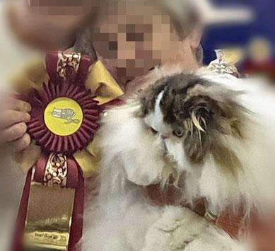 """Perserkatze mit deutlich sichtbarer Brachycephalie wird """"Best over All"""" auf der Katzenausstellung in Paaren im März 2019, Katzenverein Berliner Pro Kat, Foto: Iris"""