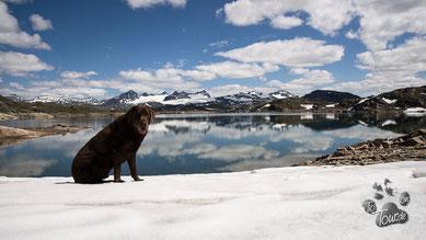 Ein Schneefeld auf dem Sognefjellet
