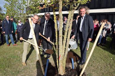 Michael Schratz pflanzt den Baum der Lernseitigkeit an der PH Niederösterreich