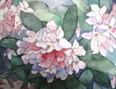水彩画 沈丁花