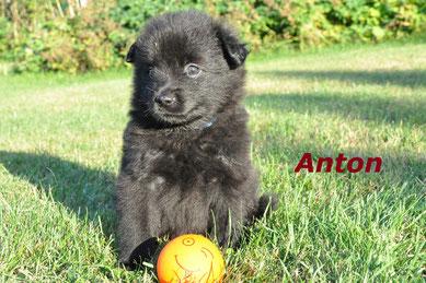 Anton - ein kleiner Herzensbrecher mit 5 Wochen