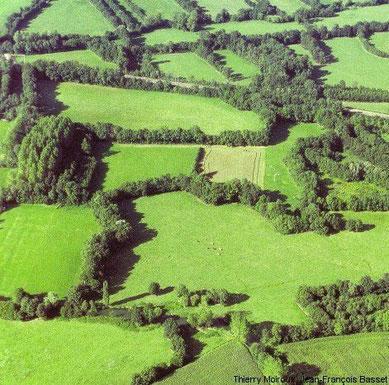 Bresse: Bocage-Landschaft
