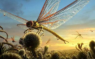 Une libellule de 70cm de long (70 cm d'envergure)
