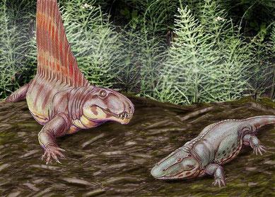 Dimetrodon et Eryops