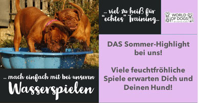 Hundeschule, Butzbach, Hund, Training, Sommer, Wasserspiele, Fun-Dog, Hundetraining