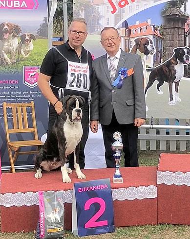 Boxer Hund vonderwaldnielerheide Jahressieger Ausstellung