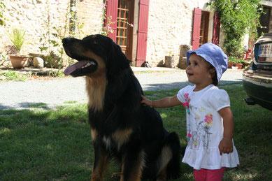 Educateur canin a domicile Bordeaux
