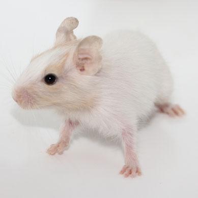 Nicht jedes aufgehellte Tier ist gleich ein Albino
