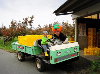 柿のオーナー制