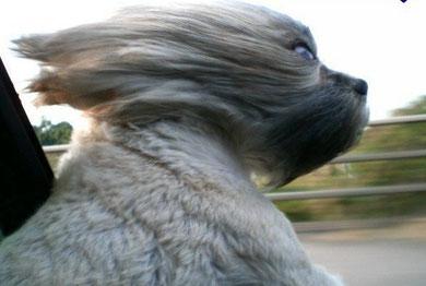 cane fuori della macchina