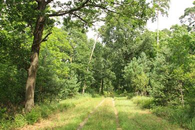 Weg durch den Westwald