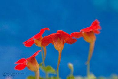 Ein tanzendes Blumen-Quartett