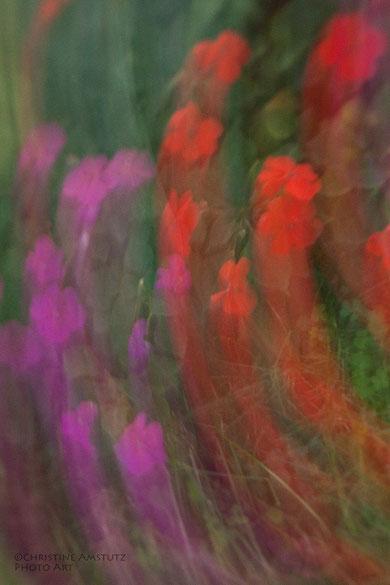 Emporragende Blüten