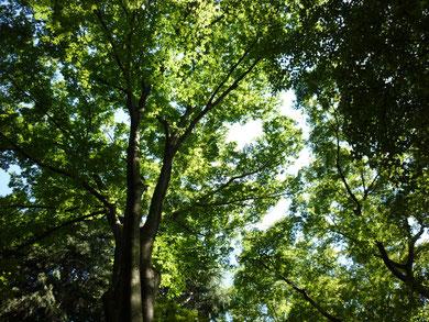 小金井公園のハンモックに揺られ撮った写真