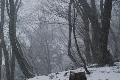 下山を始めたら激しい雪に。右斜め下に糸を引くようにふる雪が分かると思います。