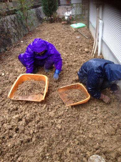 根っこからしっかりと抜かないと雑草はまた生えてきます