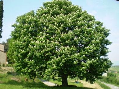 il Regno dei Cieli e come un albero, fra i cui rami gli uccelli fanno il nido