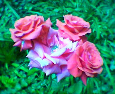 roZENblu(e)ten (c) De Toys, 23.6.2006