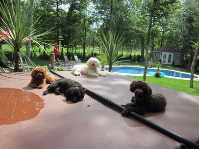 Les chiens adorent toujours être au soleil sur le spa.