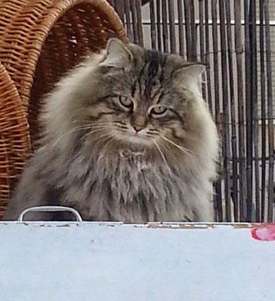 Cucciolate Precedenti Non Disponibili Not Available Gatto