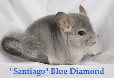 Blue Diamond de Santiago's Farm. Fuente: http://bluediamondsantiago.blogspot.com.es