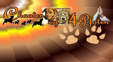Hundeschule Chaoten auf 4 Pfoten