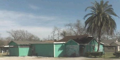 Le Y-Ki-Ki de Houston et son palmier