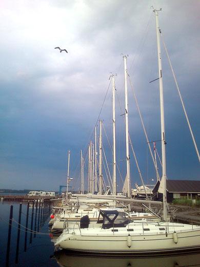 beim abendlichen Spaziergang über den Yachthafen flog diese Möwe dekorativ ins Bild - hinten links die Wohnmobile