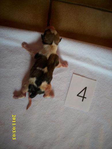 Nr.4, Rüde, 14:29, 247g (musste leider am 22.03.2011 eingeschläfert werden)