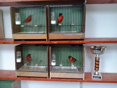 Die Siegervögel 2012 Deutsche Rotschecken Haubenvögel