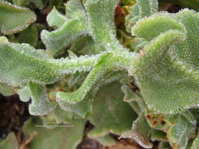 Die Welt der Pflanzen auf Fuerteventura