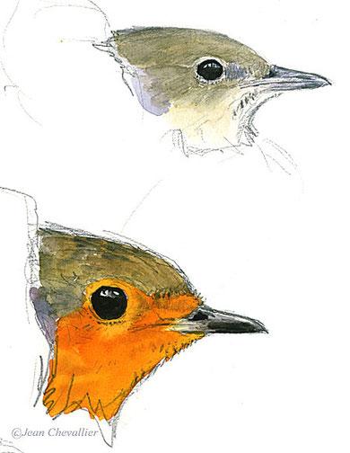portrait d'oiseaux en main, Jean Chevallier