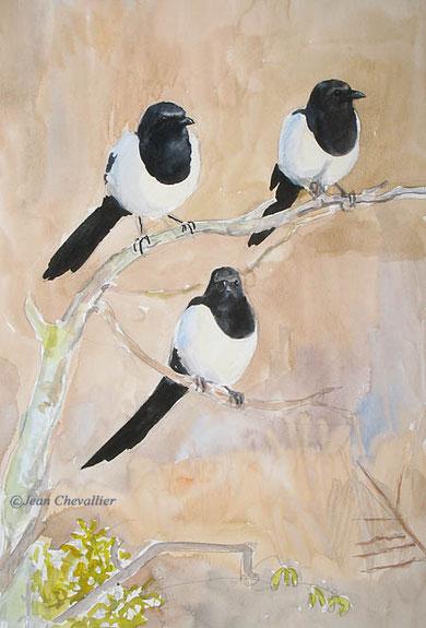 pies (pica pica) aquarelle Jean Chevallier