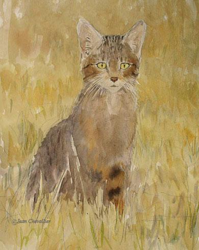 Chat sauvage, felis sylvestris, aquarelle Jean Chevallier