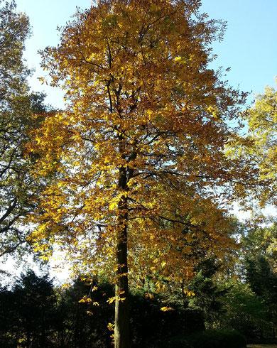 ...dieser Kastanienbaum beschützt die kleinen Gräber, wo Elira ♥ liegt....