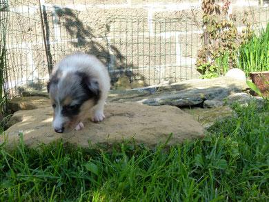 Ayoka entdeckt den Steinplatten Platz