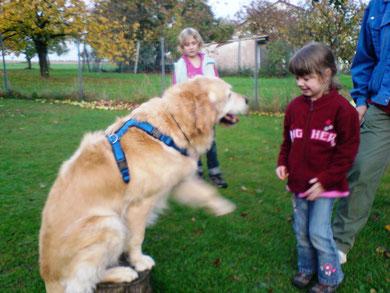 erster Kontakt zu einem so großen Hund