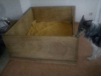 Komische Kiste, was die wohl in unserem Wohnzimmer soll?