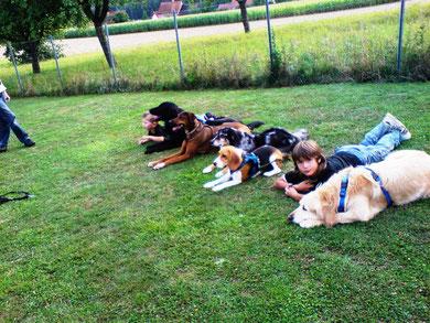 Das sind Vertrauensübungen, sie sollen z.B. Kindern die Angst vor Hunden nehmen!
