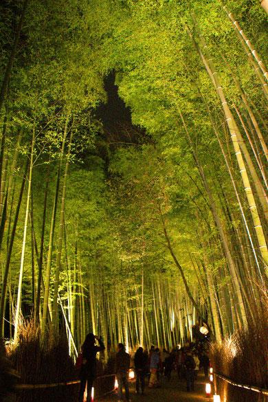 嵐山竹林 ライトアップ
