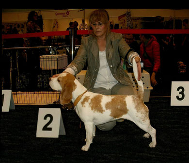 "Internationale Dog Show Zielona Gora ( Drzonkow ) Apricot Candy, Gebrauchshundeklasse "" Excellent  2  """